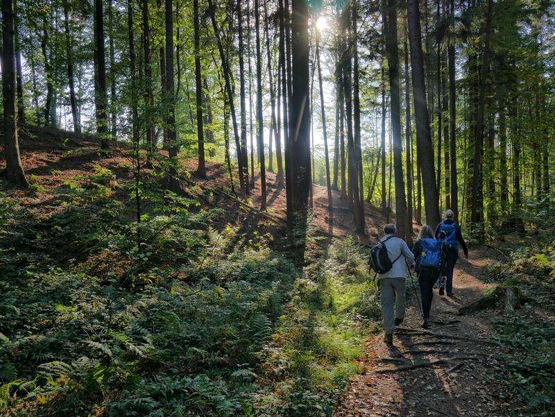 das Bild zeigt drei Wanderer im dichten Fichtenwald, durch den sich der Sonnenschein seinen Weg bahnt.