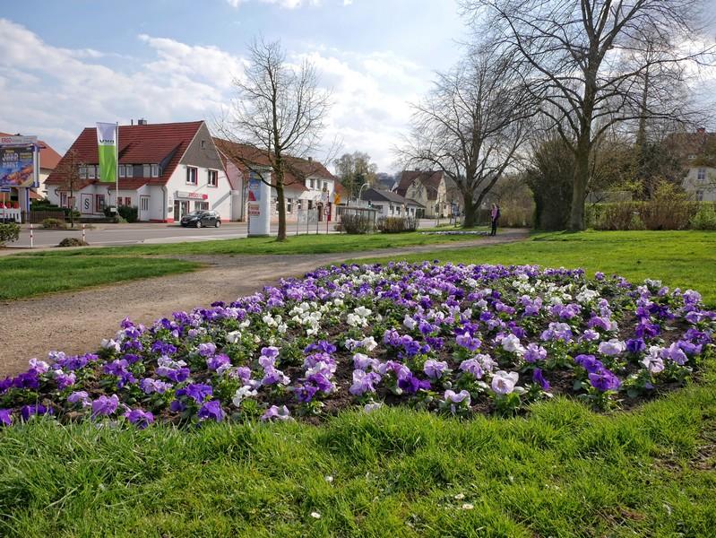 Das Bild zeigt im Vordergrund ein Blumenbeet, im Hintergrund die Sutthauser Straße.