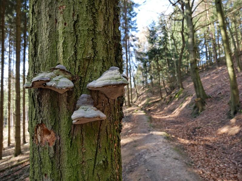Baum mit Pilzen am Wegesrand
