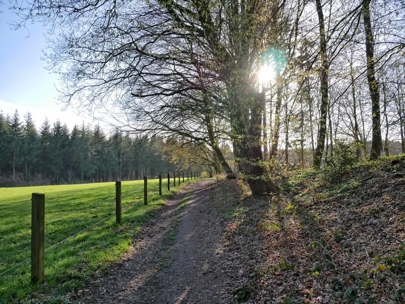 Der Wanderweg in der tiefstehenden Sonne