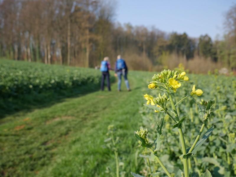 Das Bild zeigt den TERRA track Zittertal, im Vordergrund eine gelbe Blüte, im Hintergrund wandern Meike und Svenja.