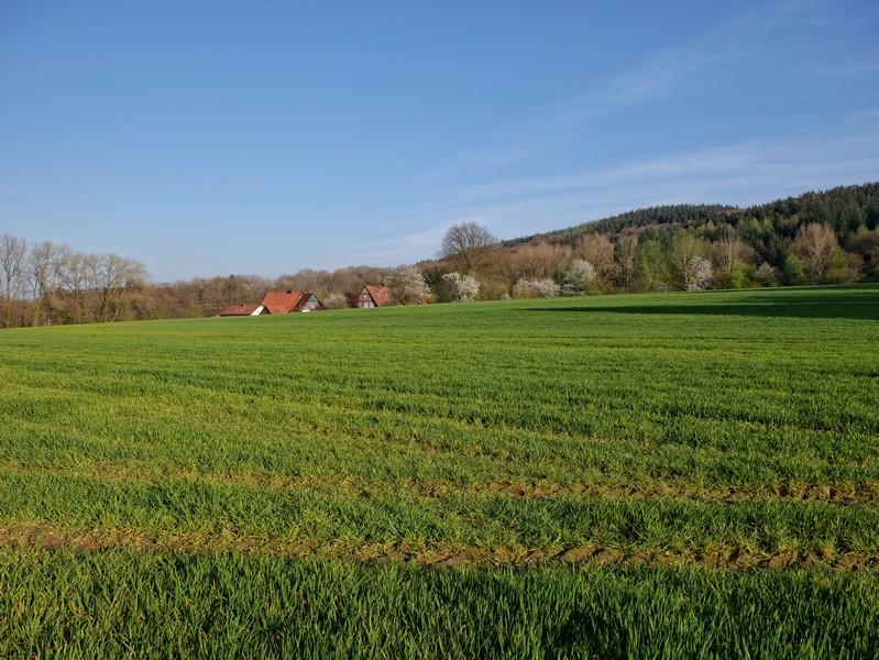 Das Bild zeigt eine grüne Wiese, im Hintergrund einige Häuser und einen Berg.