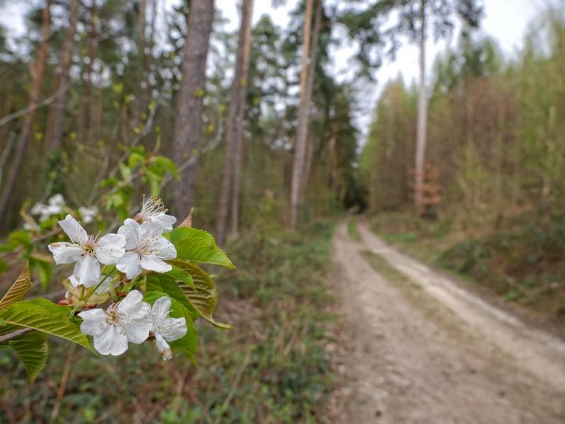 Das Bild zeigt im Vordergrund eine Blüte und im Hintergrund den Schmittenhöhenweg.