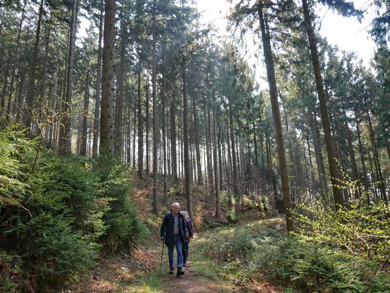 Das Bild zeigt drei Wanderer auf dem hier sehr schmal verlaufenden TERRA.track Hüggelrundweg, umgeben von einem Fichtenwald.