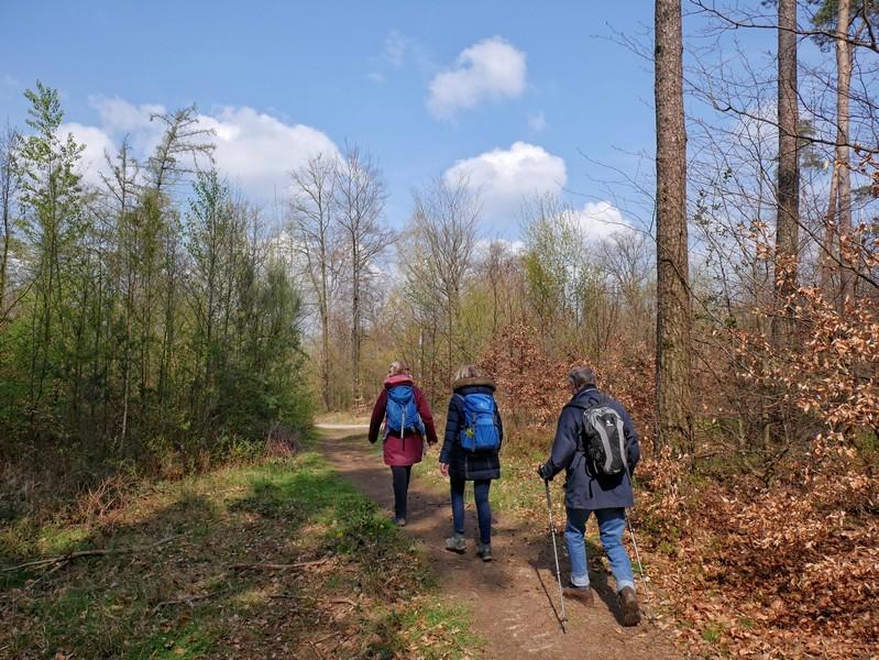 Das Bild zeigt drei Wanderer auf einem lichten Weg.