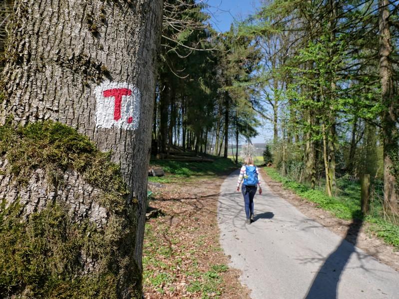 Das Bild zeigt die rotweiße Wegmakrkeirung des TERRA.tracks Borgloher Schweiz.