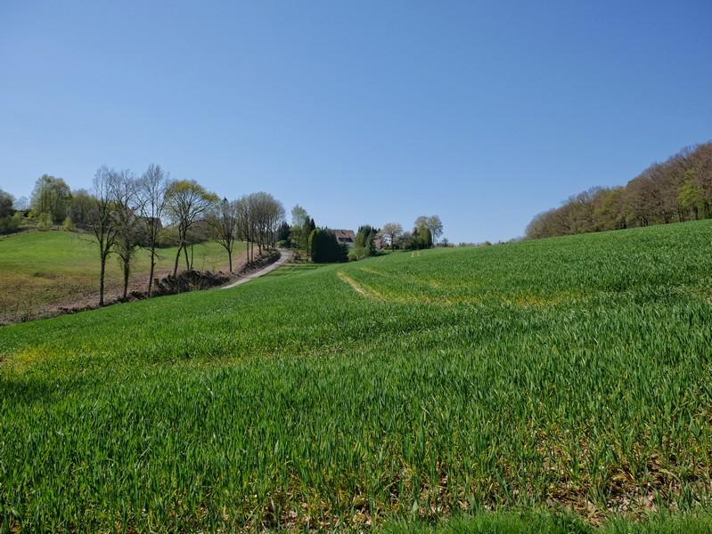 Das Bild zeigt grüne Hügel und im Hintergrund eine gewundene schmale Straße.