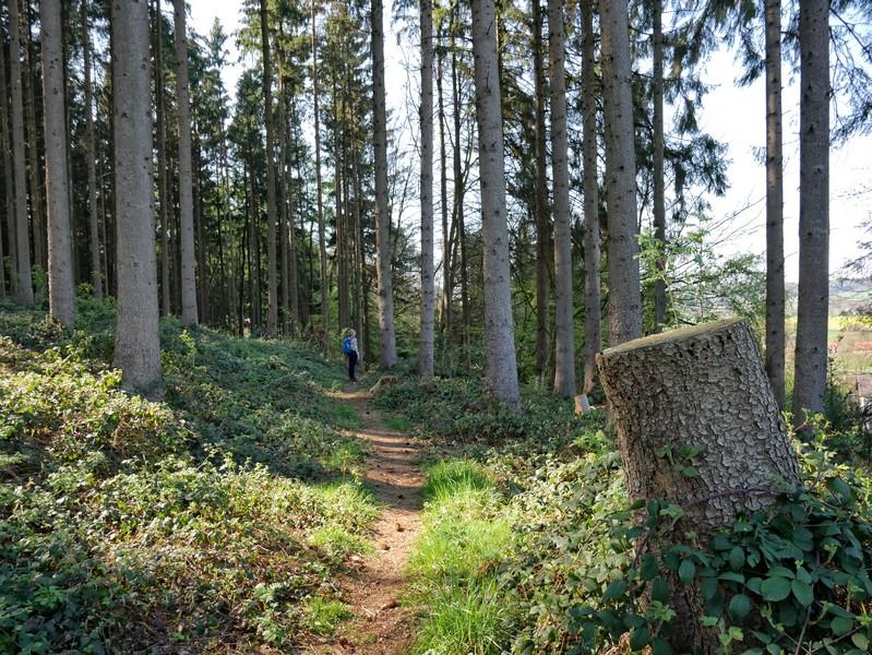 das Bild zeigt Meike auf einem schmalen Waldpfad.