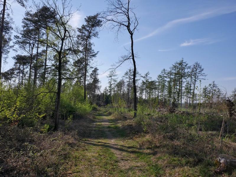 Das Bild zeigt den Wanderweg auf der Larberger Egge.