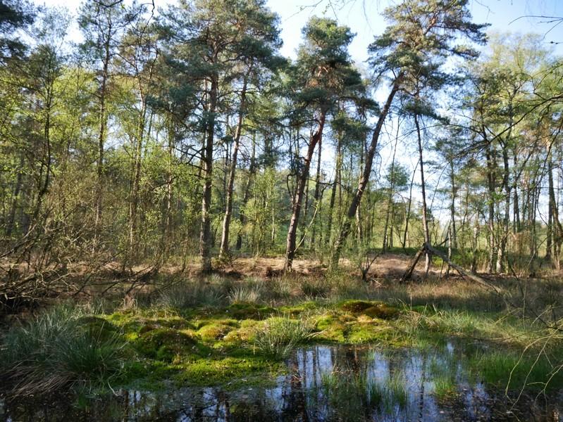Das Bild zeigt einen Sumpf, aus dem Gräser und Bäume wachsen.