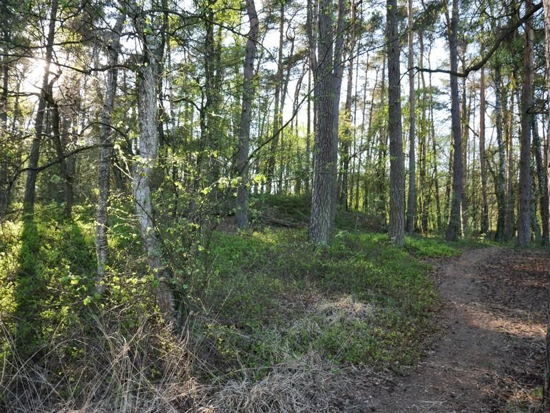 Das Bild zeigt den schmalen Seitenpfad, der tiefer ins Moor führt.