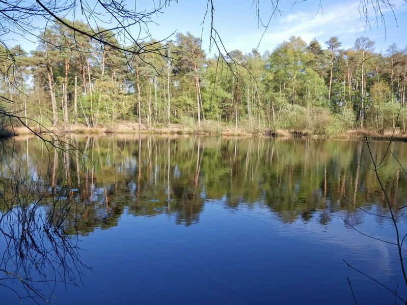 Das Bild zeigt einen kleinen See. Die Bäume spiegeln sich im Wasser wider.