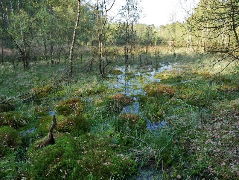 Das Bild zeigt eine sumpfige Landschaft mit viel Grün und vereinzelten Bäumen, die aus dem Wasser ragen.