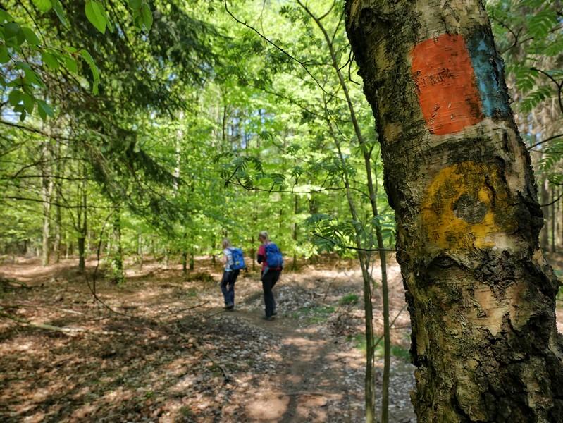 Das Bild zeigt einen Baum, der die orange-blaue Markierung des DiVa Walk trägt.