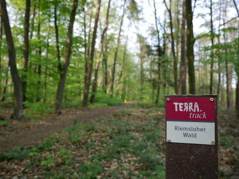 Das Bild zeigt die rotweiße Wegmarkierung auf dem TERRA.track Riemsloher Wald