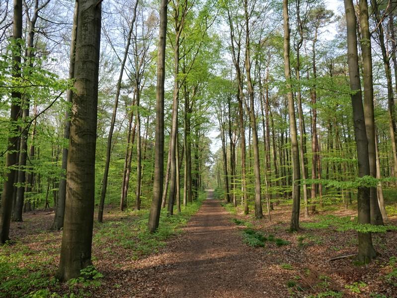 Das Bild zeigt einen längeren gerade Weg auf dem auf dem TERRA.track Riemsloher Wald.