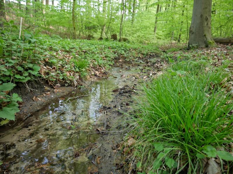 Das Bild zeigt einen kleinen Bachlauf im Riemsloher Wald