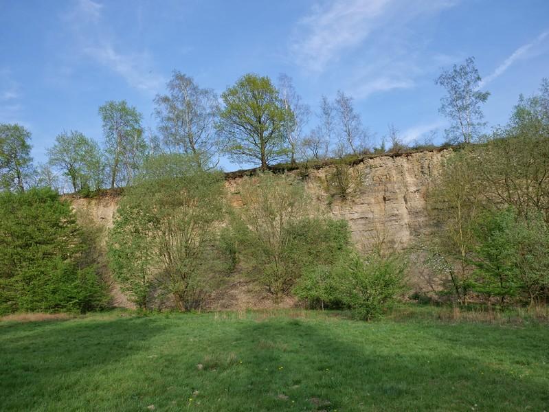 Das Bild zeigt die Felswand im alten Steinbruch, auf der einige Bäume wachsen. Davor ist eine Wiese zu sehen.