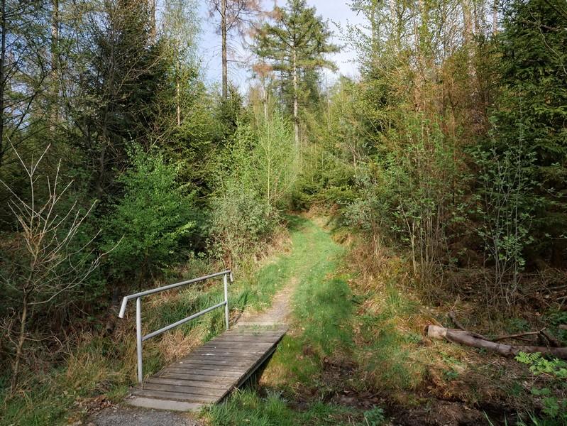 Das Bild zeigt eine sonnenbeschienene kleine Holzbrücke mitten im dichten Mischwald.