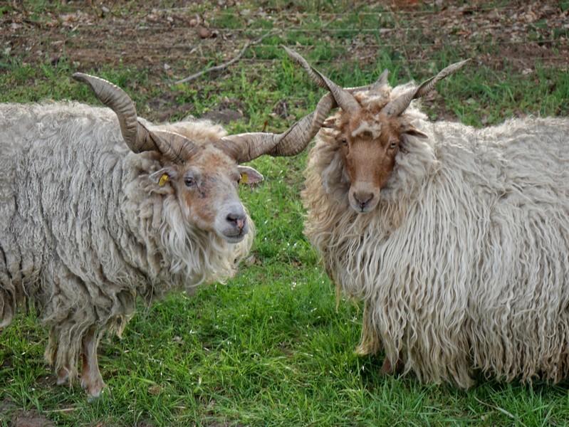 Dieses hübsche Duo treffen wir ebenfalls am Wegesrand auf dem TERRA.track Riemsloher Wald.