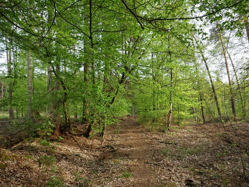 Das Bild zeigt einen schmalen Pfad, der an beiden Seiten dicht von Bäumen bewachsen ist.