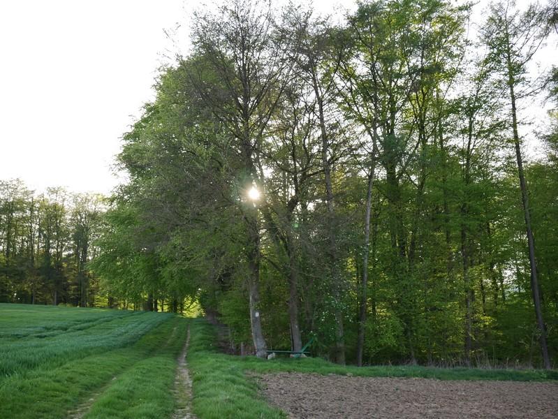 Das Bild zeigt eine Bank am Wegesrand, dahinter den Wald und die darin versinkende Sonne.