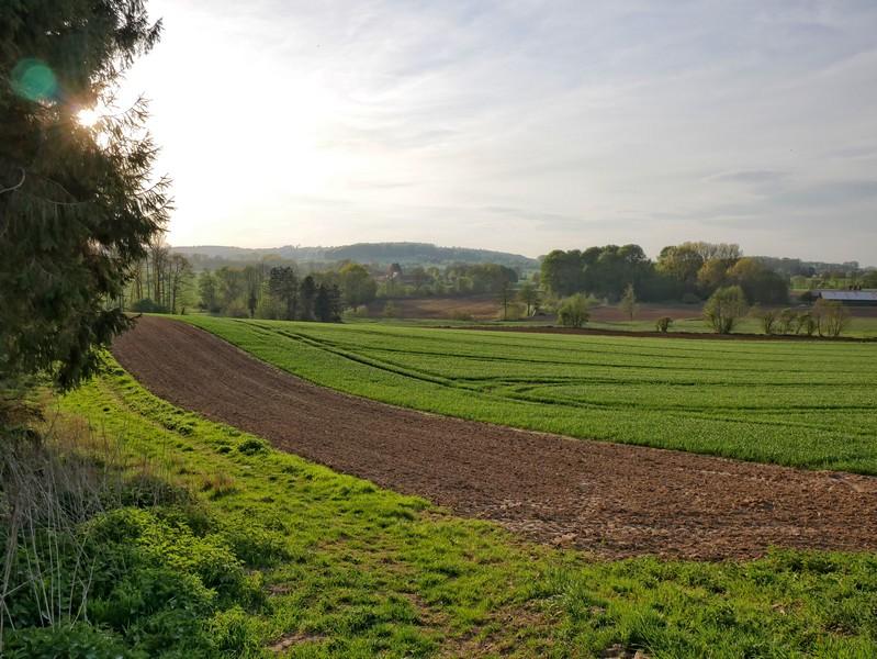 Das Bild zeigt ein Feld und links die untergehende Sonne hinter einem Baum.