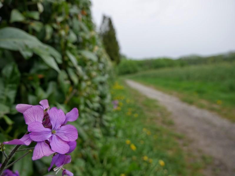 Das Bild zeigt im Vordergrund eine Blüte, im Hintergrund verschwommen den TERRA.track Meller Balkon.
