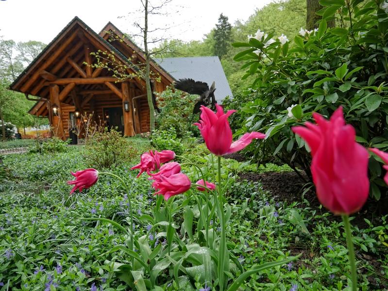Das Bild zeigt das Weberhaus direkt am TERRA.track Meller Balkon, im Vordergrund sind mehrere Blumen zu sehen.