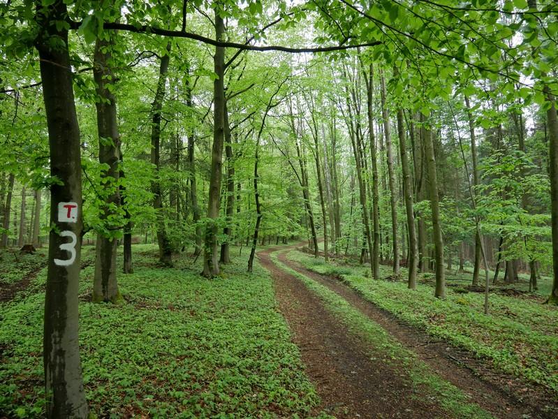 Das Bild zeigt einen breiten Wanderweg durch den Buchenwald.