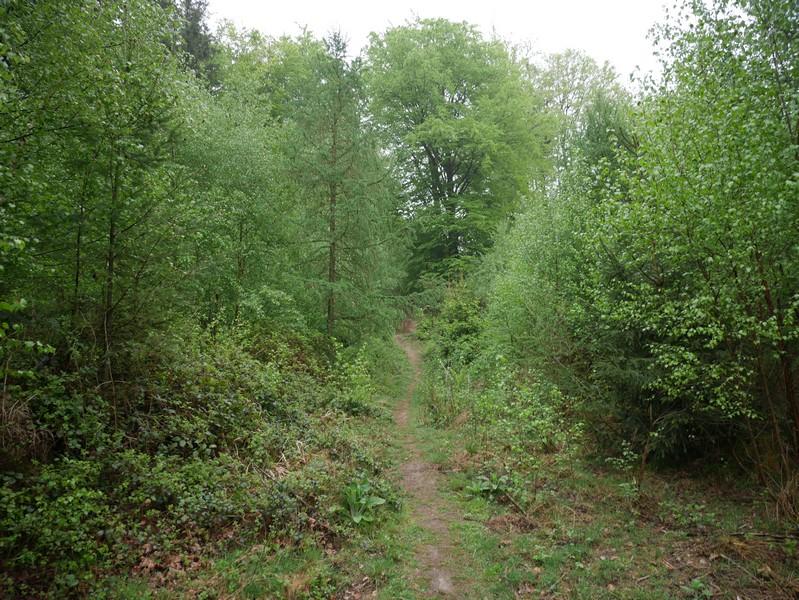 Das Bild zeigt den TERRA.track Meller Balkon, der hier als schmaler Pfad durch dichten Wald verläuft.