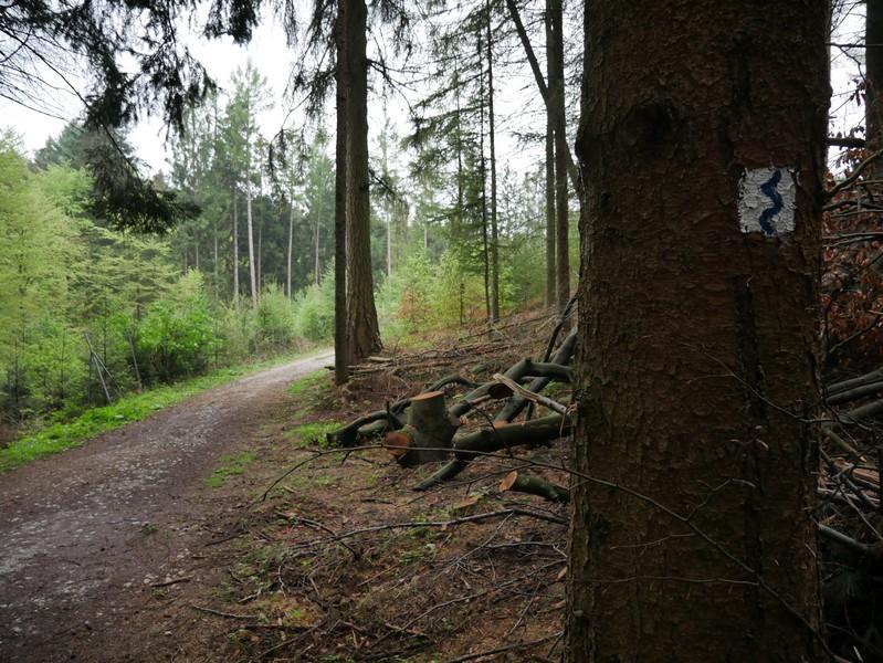 Das Bild zeigt den TERRA.track Naturerlebnispfad Zwickenbachtal, der hier im Wald verläuft und im Vordergrund die blauweiße Wegmarkierung an einem Baum.