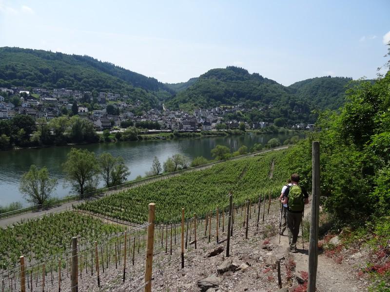 Das Bild zeigt zwei Wanderer auf dem Weg durch die Weinberge in Richtung Mosel.