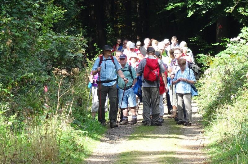 Das Bild zeigt eine sehr große Wandergruppe, die uns auf dem Rheinburgenweg entgegen kam.