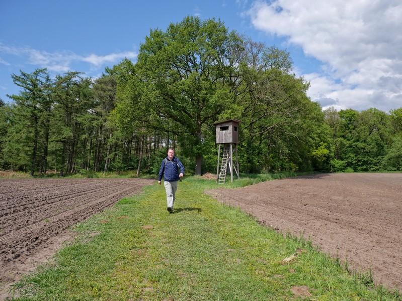 Das Bild zeigt den Wandervogel zwischen zwei Feldern wandernd. Im Hintergrund sind Wald und ein Hochsitz zu sehen.