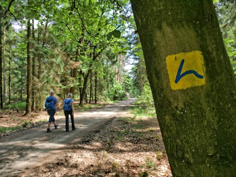 Das Bild zeigt das Hünenweg Symbol an einem Baum, links davon zwei Wanderer auf dem Weg.