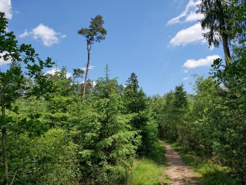 Das Bild zeigt einen Waldweg auf dem Teutoschleifchen Steinbecker Runde.