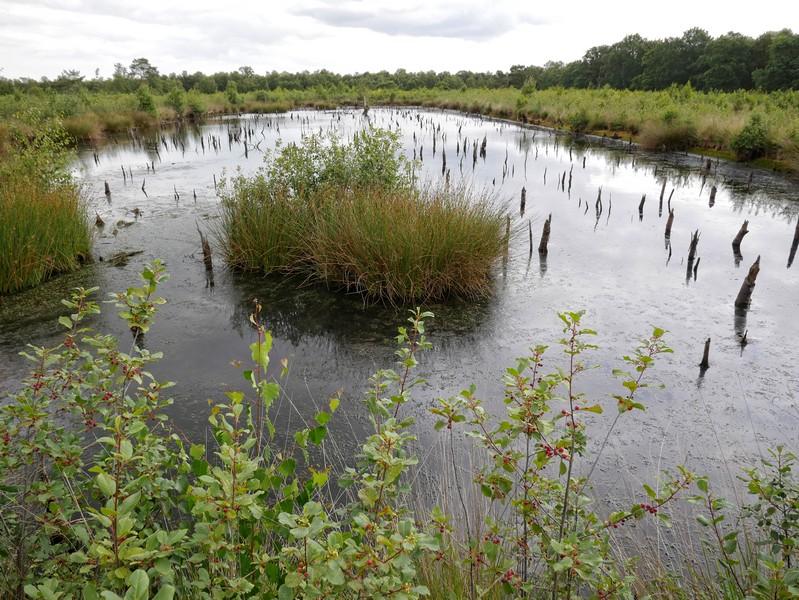 Das Bild zeigt einen kleinen See im Venner Moor.