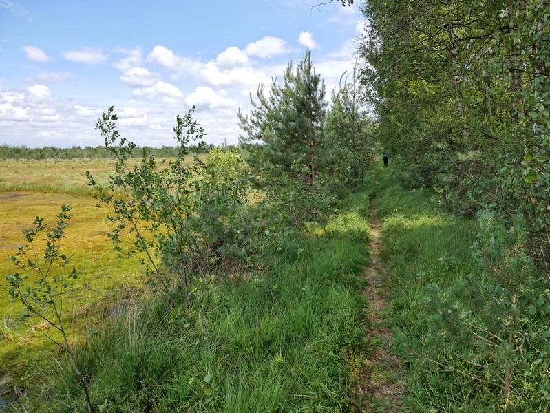 Das Bild zeigt den schmalen Pfad am Rande des Venner Moores.