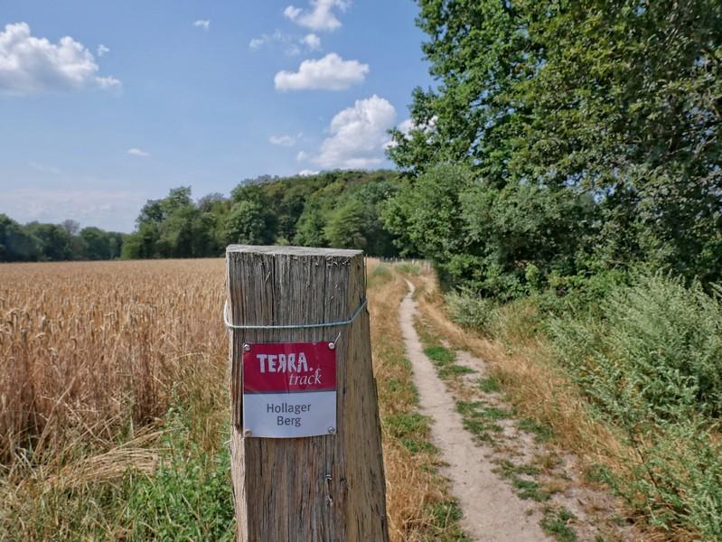 Im Großen und Ganzen sehr zuverlässig: die Ausschilderung auf dem TERRA.track Hollager Berg.