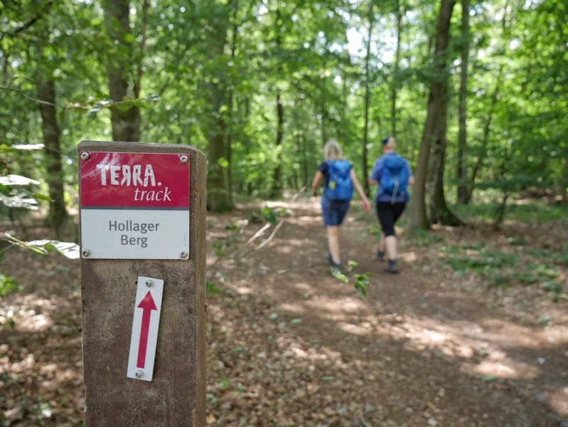 Das Bild zeigt die rotweiße Markierung auf dem TERRA.track Hollager Berg.
