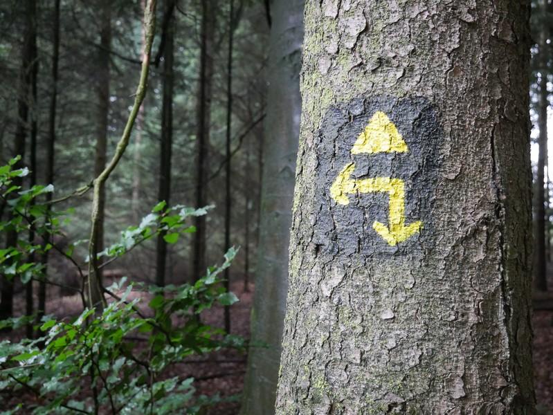 Das Bild zeigt die Wegmarkierung an einem Baum - das gelbe Dreieck auf schwarzem Grund.