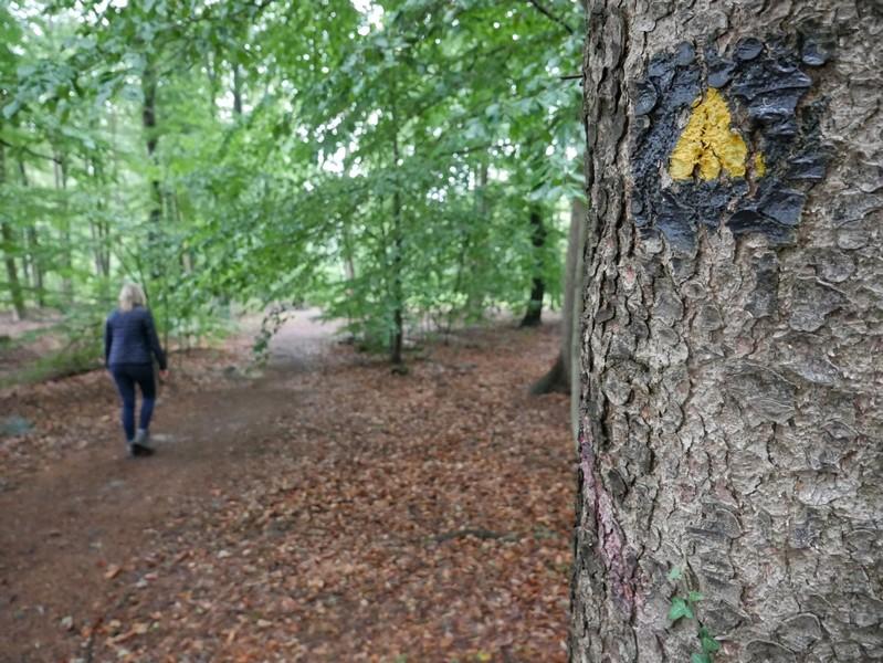 Das Bild zeigt Meike auf einem der Waldwege.