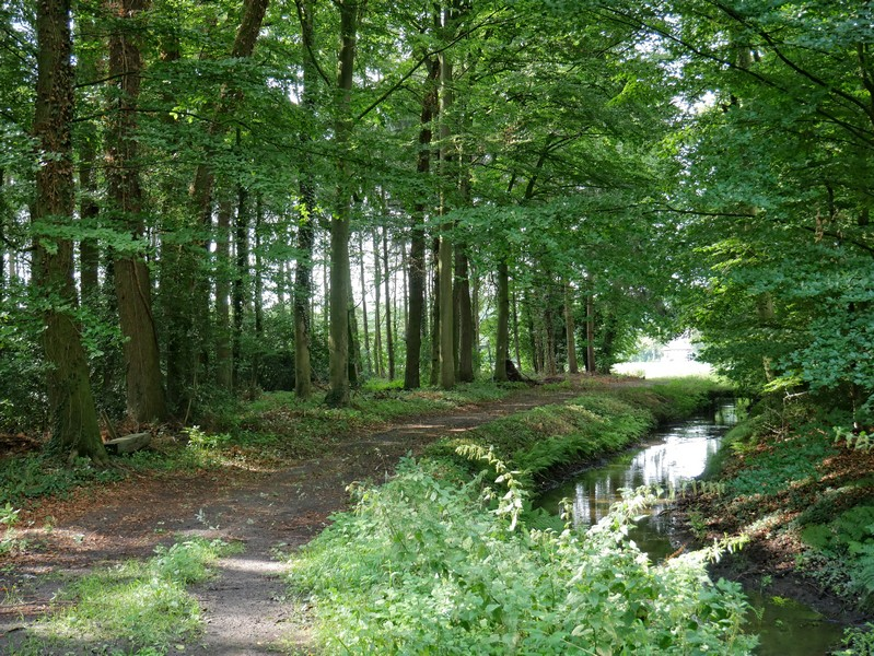 Das Bild zeigt den DiVa Walk, der hier nahe Schloss Alt Barenaue im Wald neben einem Fluss verläuft.