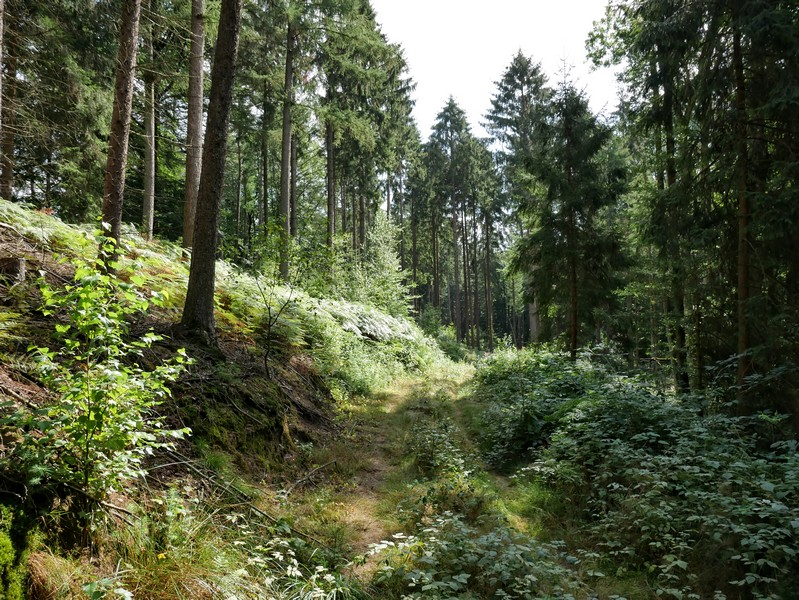 Der DiVa Walk scheint in diesem Abschnitt nicht sonderlich stark frequentiert zu sein, mitunter ist der Weg nur zu erahnen.