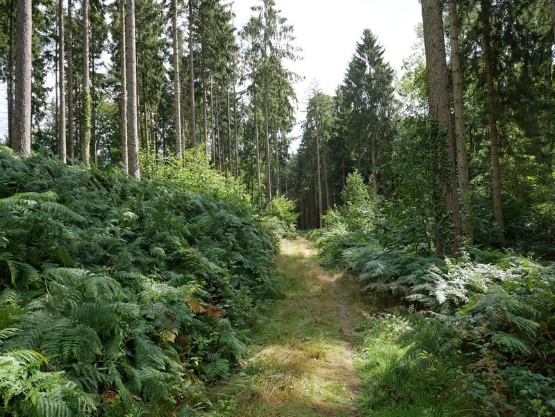 Wunderbare, stille Wege führen uns durch den Wald.