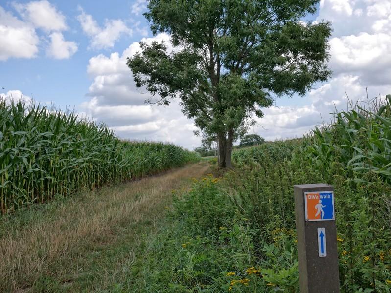 Viel Mais und hin und wieder ein Baum - der DiVa Walk stellt uns auf die Probe...