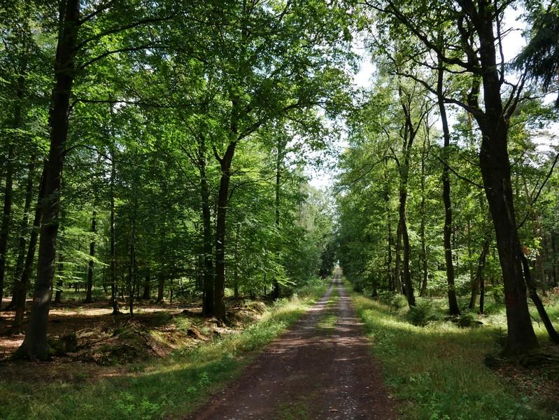 Auch eine lange Gerade, aber immerhin im Wald...