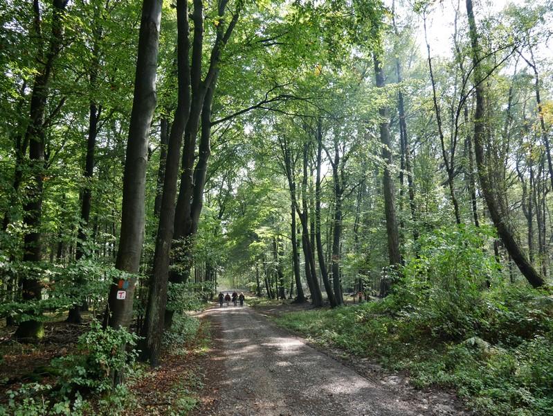 Zum Wittekindsweg und unserem TERRA.track Wildstein gesellt sich nun auch noch der orangeblaue DiVa Walk.