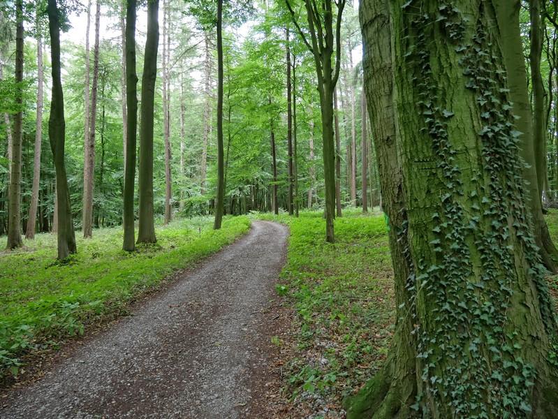 Idyllische Wege führen uns durch den Kalkbuchenwald auf dem Stemweder Berg.